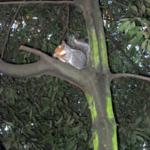 Un petit écureuil dans Dublin Pheonix Park