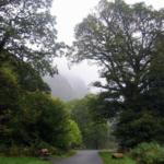 photo de la forêt de Glendalough