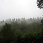 photo sous la brume à Glendalough