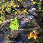 Photo de végétation à Glendalough, Irlande