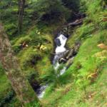 Ruisseau à Glendalough