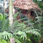 Photo serre du jardin Botanique de Dublin