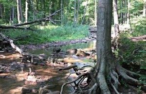 Randonnée pédestre sur le Bruce Trail