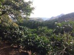 Visiter une plantation de café au Costa Rica