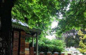 Des ruches en plein coeur du jardin du Luxembourg