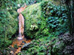 Cascade d'eau chaude sur le site naturel de Caldeira Velha, sur l'île Sao Miguel