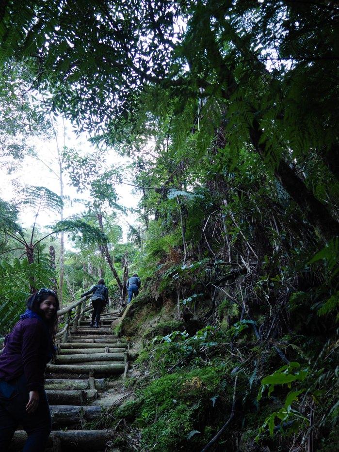 La montée de marches dans le parc naturel de São Miguel, aux Açores