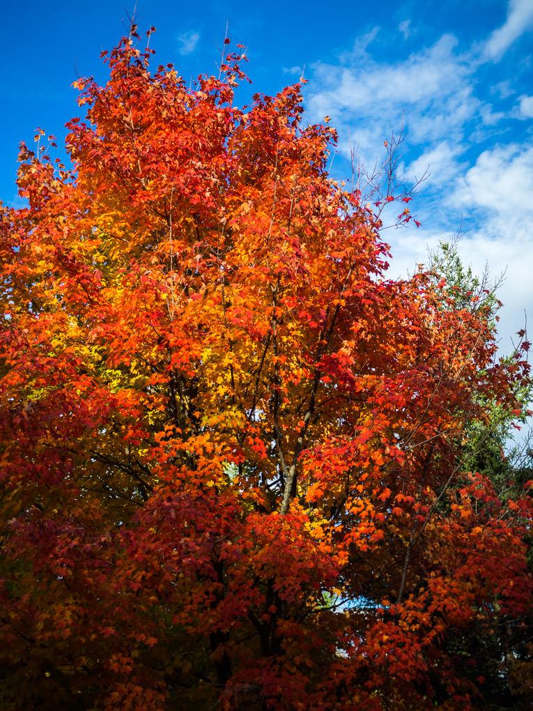 photo arbre à Hilton Falls, Canada, en automne