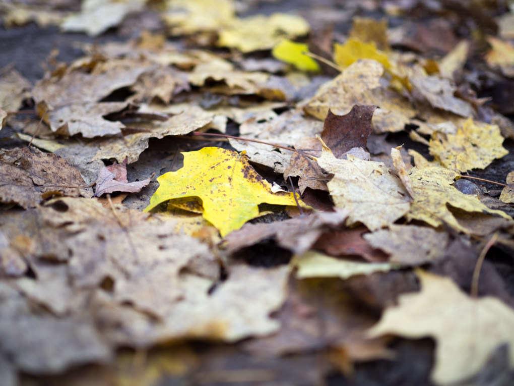 photo des feuilles en automne, Hilton Falls