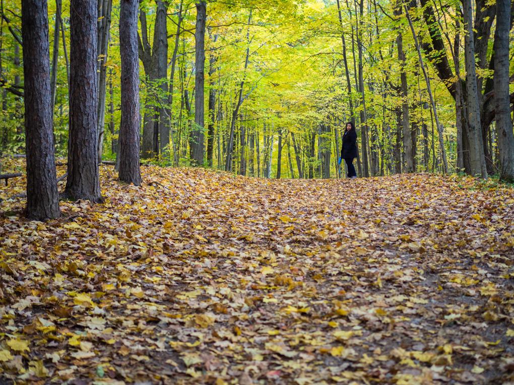 photo de randonnée en automne à Hilton Falls