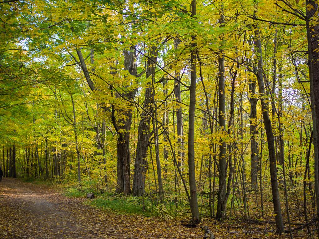 Ephoto de randonnée en automne à Hilton Falls