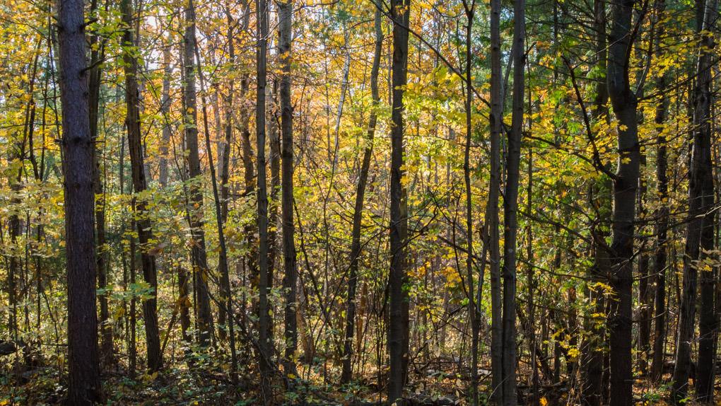 photo de Hilton Falls dans la forêt en automne