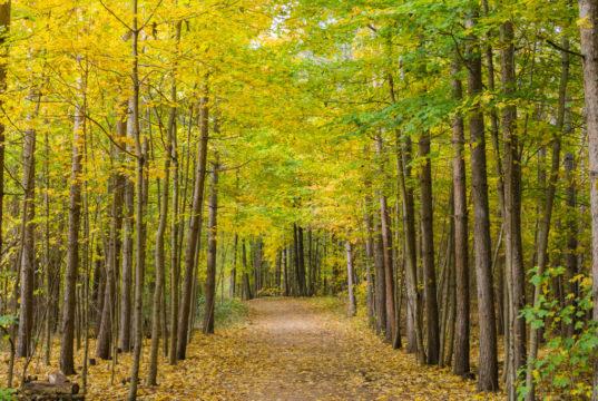 Balade en forêt au cœur l'automne au Canada...