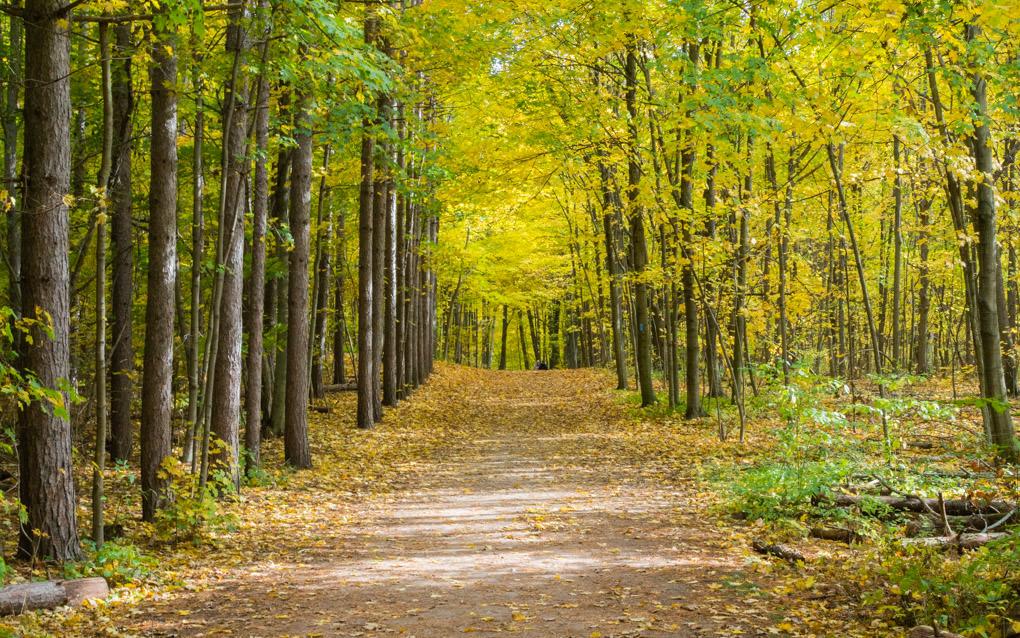 photo de sentier de randonnée en forêt en automne au Canada