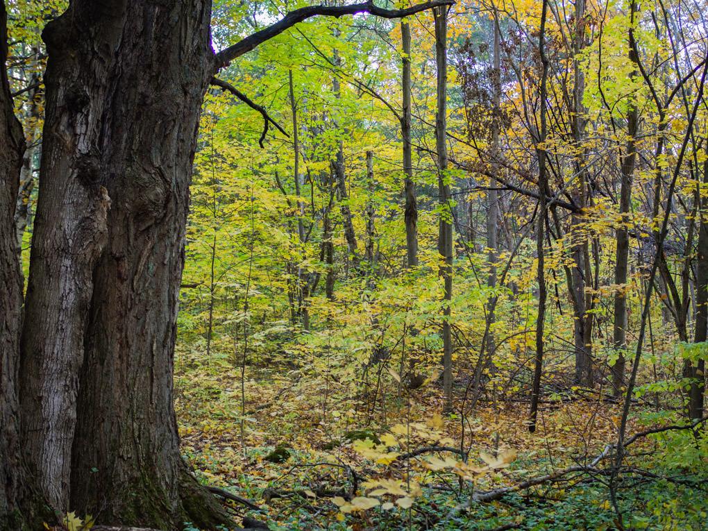 Couleurs d'automne en pleine nature au Canada...