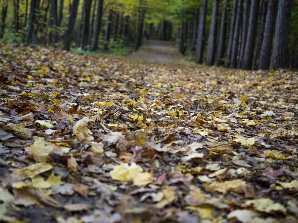 Un tapis de feuilles aux allures inquiétantes...