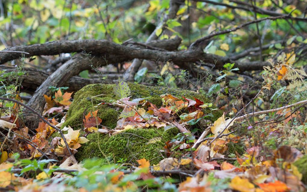 De la mousse et des feuilles...